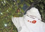 매분 1.2건 출동한 119구조대…1위는 벌집제거
