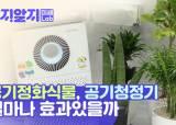 공기정화식물의 배신···미세먼지 제거, 청정기와 비교해보니