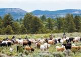 [라이프 트렌드] 척박한 땅 일구고 부산물 먹어 치우는 '지구환경 지킴이' 소