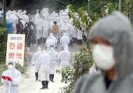 [속보] 경기도 연천서 아프리카돼지열병 의심 신고
