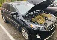 [서소문사진관]자동차 보닛 속 호두 200개. 범인은 누구?