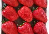 극일(克日) 농산물 대명사 딸기, 비타민C 많은 신품종 또 나왔다