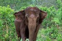 53살 추정 '서커스 코끼리' 칠레 떠나 브라질서 새 보금자리 찾아