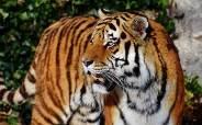 """""""난 사람은 안 먹어"""" 호랑이의 짐승과 사람 판별법"""