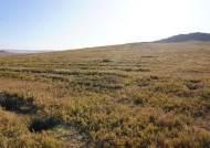 풀 한 포기 없던 몽골 황무지…나무 심으니 '윈도우 배경화면'됐다
