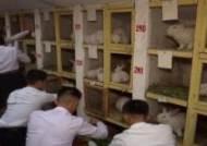 """""""사상적으로 달라붙어라""""…북한이 토끼사육 권장하는 까닭은"""