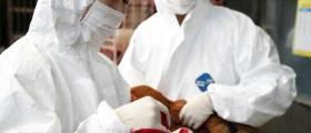 가축 전염병 '엎친데 덮친 격'…<!HS>돼지열병<!HE>에 고병원성 의심 AI까지