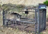 사람 마주친 멧돼지가 집중 공격하는 신체 부위 어디?