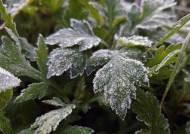 맑고 쌀쌀한 주말···일요일 아침 첫 영하권, 서리·얼음도