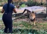 브롱스 <!HS>동물원<!HE> 사자 우리 침입해 춤춰 고소당한 美여성 검거
