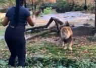 브롱스 동물원 사자 우리 침입해 춤춰 고소당한 美여성 검거