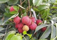 아열대 작물 재배 지역 북상 중…귀농인들 커피 어때요?