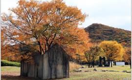 [조용철의 마음 풍경] 느티나무 집