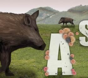 철원 멧<!HS>돼지<!HE> 폐사체 2개체서 <!HS>돼지열병<!HE> 바이러스 검출…25번째