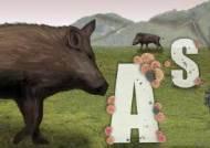 철원 멧돼지 폐사체 2개체서 돼지열병 바이러스 검출…25번째