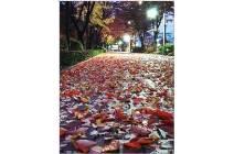 [조용철의 마음 풍경] 가을이 가네