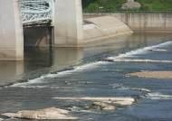 보 활짝 연 금강·영산강 녹조 줄었다···낙동강은 되레 증가
