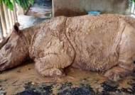 말레이 수마트라 코뿔소 멸종…마지막 한 마리도 폐사