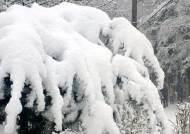 [서소문사진관] '여기가 진짜 겨울왕국' 강원 산간 올 겨울 첫 대설주의보