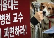 '동물 학대' 실험 의혹 서울대 이병천 교수 기소의견 검찰 송치