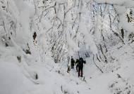 강원 밤부터 눈, 최고 30㎝ 쌓인다···산지에 대설 예비특보