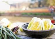 [맛있는 도전] 신선 식재료 이용 '김장대잔치' 체험행사