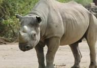 내년에 위기 온다면 '회색코뿔소'일까 '검은백조'일까