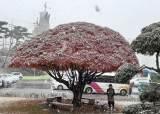 찬 바람 속에 서해안에 눈·비…서울도 오전과 늦은 밤에 눈발