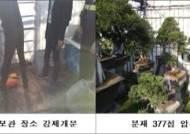 수억원대 분재 사고, 벽틈에 5만원권···탈세범들 '기막힌 수법'