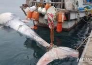 제주 해상서 발견된 대형고래…길이만 아파트 5층 높이