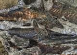 공룡은 어이 없었다, 백악기 운수없는 날···NYT 올해 과학뉴스