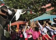 인구 94% 불교 믿는 태국에 나타난 '코끼리 산타'