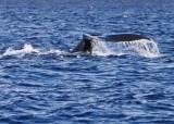 고래가 돌아왔다, 하와이를 겨울에 가야 하는 이유