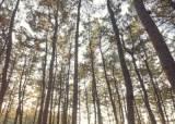 새로운 즐거움을 찾다…울진,소나무숲,불영사,차 한잔…