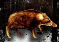 파주 멧돼지 폐사체서 아프리카돼지열병 검출