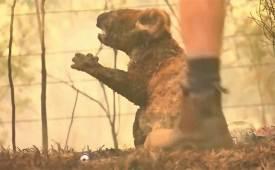 산불 말고도 암성병사냥 수난호주 야생동물 원래 위기였다