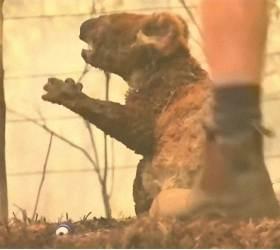 산불 말고도 암·성병·사냥 수난···호주 야생동물 원래 위기였다