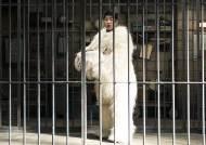 [신작IS] '해치지않아', 북극곰이 된 안재홍..로다주 대적할 상상력의 힘