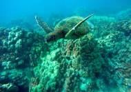짝 잃은 바다거북 99%가 암컷…멸종위기종 19% 기후변화로 고통