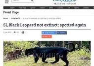멸종된 줄 알았던 스리랑카 흑표범 발견돼…두 마리 새끼도 포착