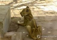 '갈비뼈 고스란히'…우리에 갇힌 앙상한 사자 '충격'
