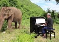 [서소문사진관]피아노 연주에 병든 코끼리가 보인 놀라운 반응