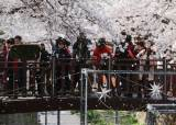 오는 봄도 막는다...코로나 바이러스에 자치단체 축제 비상