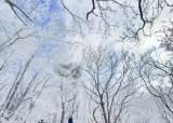 눈꽃, 상고대, 설원, 자작나무<!HS>숲<!HE>… <!HS>겨울<!HE> 막바지 제대로 즐기려면