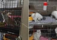 부산 주택서 철창 갇힌 고양이 400마리 발견…불법 사육 의혹