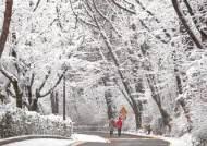 [한 컷] 설국(雪國)으로 변신한 남산