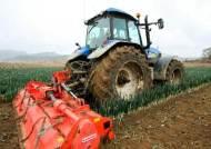 대파값 3분의 1토막에 분노…트랙터로 밭 갈아엎는 농부