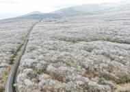 초미세먼지 연평균 기준 충족하는 곳…제주 한라산이 유일할 수도