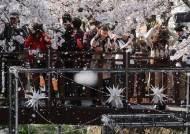 57년만에 진해군항제 취소됐다...코로나 여파에 봄꽃 축제 취소