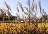구들장논, 제주 밭담, 인삼밭…우리가 몰랐던 농업 유산들